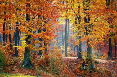 Image of a Leaves Changing in a Forest, a Setting that Might Implicate the WV Recreational Land Use Law. For Information about How This Statute Affects Those Who Hunt or Fish on Your Property, Contact Hendrickson & Long, PLLC.
